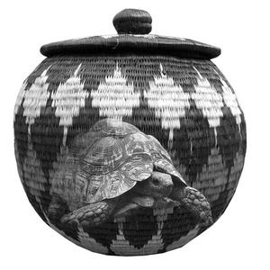 300manden-tortoise-kopie